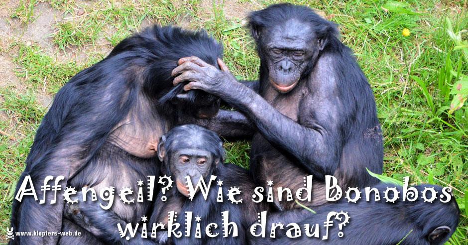 Affengeil? Wie sind Bonobos wirklich drauf?